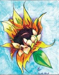 sunflower-sm2010