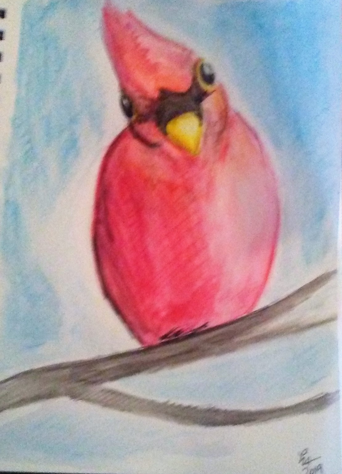 A red cardinal staring at the viewer with a question look